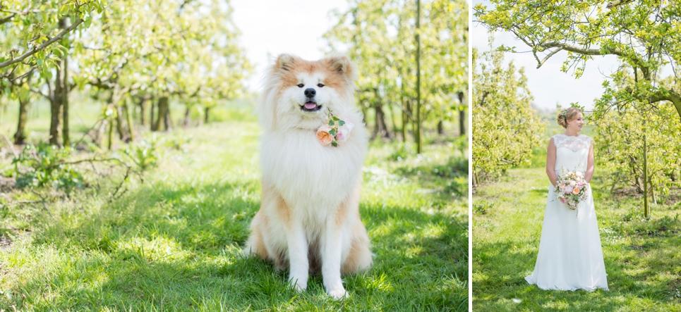 huisdier-op-je-bruiloft-fotografie-hond