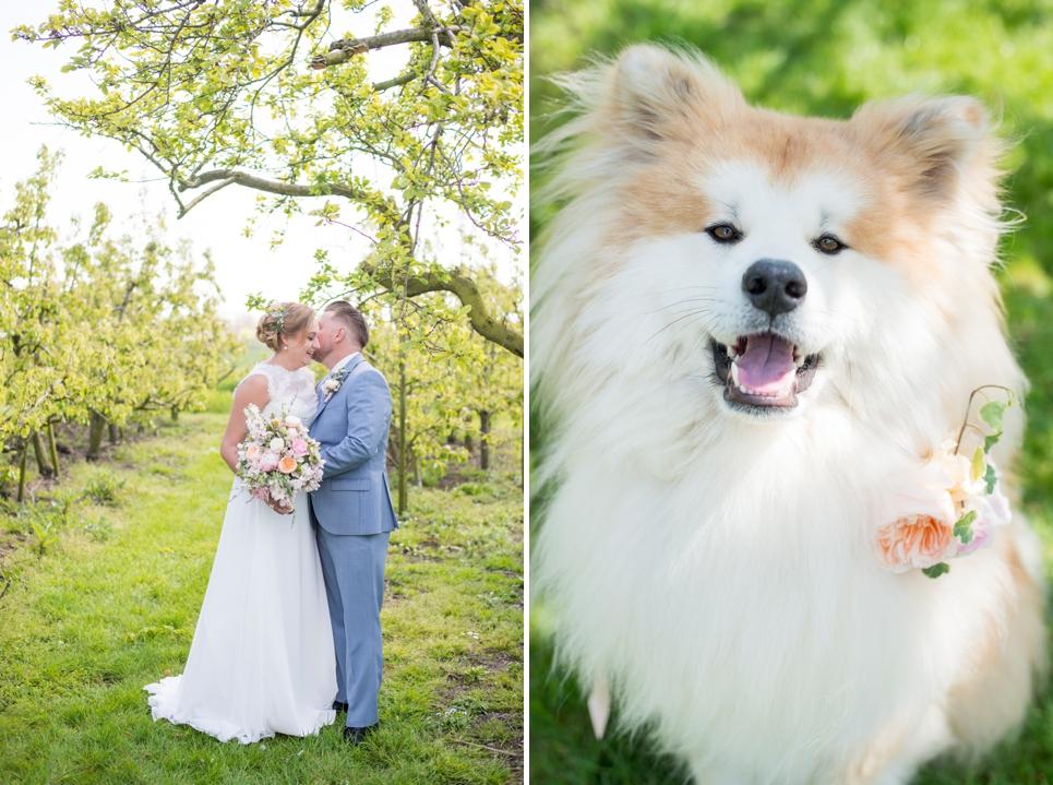 fotografie-bruiloft-huisdier-hond
